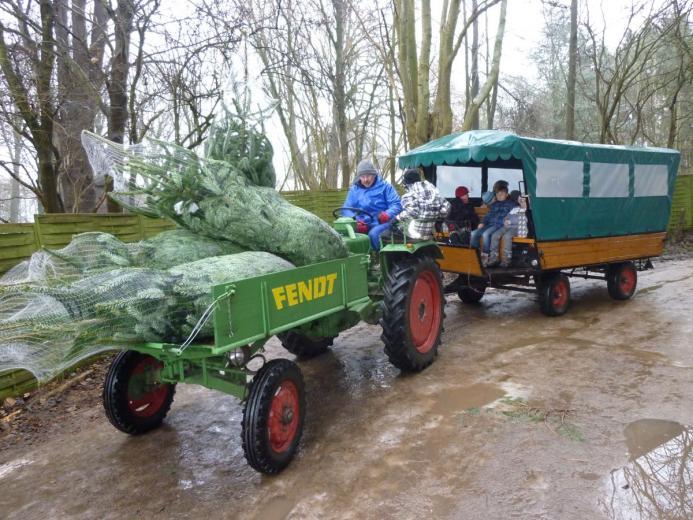 Gratis Treckerfahrten in den Weihnachtswald zum Tannen selbst sägen. Kostenloses Parken.